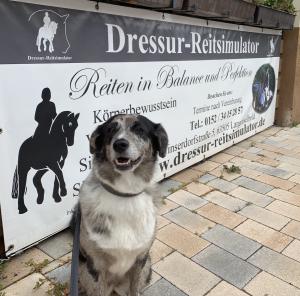 Pferdemädchen Podcast Live Love Ride Dressur Reitsimulator Sabine Blank