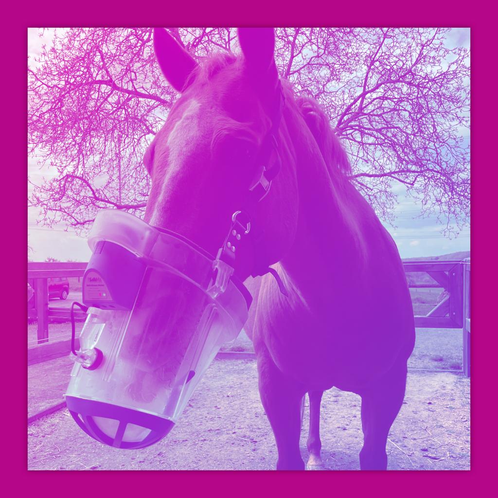 LIVE LOVE RIDE Der Pferdemädchen Podcas Inhalation bei Pferden Pferdeinhalation SaHoMa Eva Kern